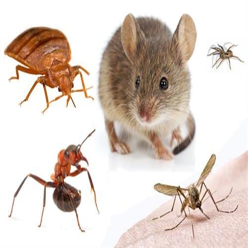 Toutes les solutions d'insecticides conventionnels et biologiques professionnels contre tous nuisibles.